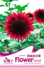 1 Pack 15 Sunflower Seeds Helianthus Annus Sunflower Red Fortune Flowers A108