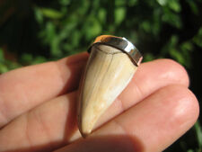 Natural 925 Sterling Silver Otodus Obliquus shark tooth fossil pendant A12