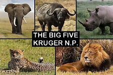 SOUVENIR FRIDGE MAGNET of THE BIG 5 in KRUGER NATIONAL PARK SOUTH AFRICA