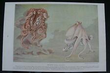 Imprimir peces 1924 Pulpo