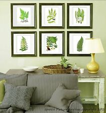 Set of 6 Fern Prints Green Antique Botanical Victorian Art Wall Hanging