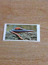 Trade Card Lyons Maid On Safari No 12 Coral Snake M48