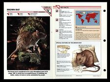 """BROWN RAT"" WILD LIFE FACT FILE ANIMAL INFO-CARD/HOME SCHOOL STUDY"