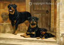 Rottweiler limited edition dog print by Robert J. May