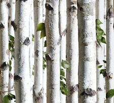 NIP* KOZIEL BLUFF SILVER BIRCH TREES WALLPAPER J21517 WHITE BIRCH TREES Muriva?