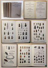 Reitter Fauna Germanica Die Käfer 1908 Band 1-5 Biologie Zoologie Deutschland xz