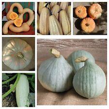 Beliebte Kürbissamen,popular squash, 6 Arten,40 Samen,seeds,getrennt verpackt