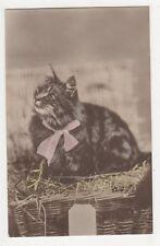 Cats, Ettlinger 551 Postcard, B371