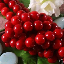 10mm natural Red Coral Round Loose Beads 15''inch