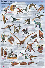 Pterosaurs Dinosauer Laminated Educational Science Classroom Chart Poster 24x36