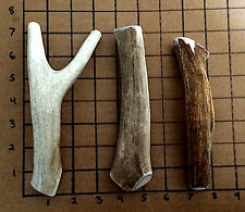 Medium whole deer antler dog chew/ toy! Awesome Price!!