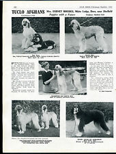 AFGHAN HOUND OUR DOGS OLD 1949 DOG BREED KENNEL ADVERT PRINT PAGE