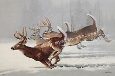 Phillip Crowe ONCE IN A LIFETIME Signed & Numbered w/coa Whitetail Deer Buck Art