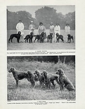 IRISH SETTER NAMED DOGS AND OWNERS OLD ORIGINAL DOG PRINT FROM 1934