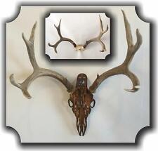 HEADCASE Deer Antler Hanging Mount Display Kit Hand Made Made in USA