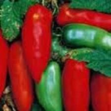 """Organic Heirloom Paste Tomato 25+Vegetable Seeds ''Sausage"""" less water content!"""