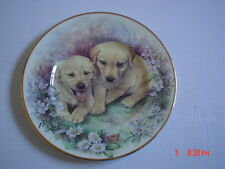 Lovely Fenton Fine China 8 Inch Plate Labrador Puppies