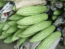 New Seeds Heirloom Chinese Bitter Gourd Bitter Melon Seeds + Delivery...