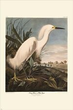 snowy heron VINTAGE AUDUBON POSTER detailed wildlife collectors 24X36 RARE