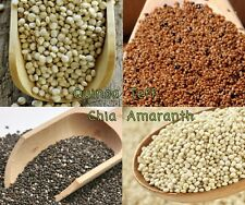 Grow Four Ancient Grains; Quinoa + Teff + Chia + Amaranth ~ Free shipping