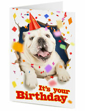 Funny excited English Bulldog dog party hat busts through wall Birthday card