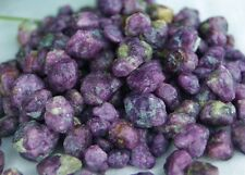huge lot of  520 Carats Corundum Ruby Raw Nuggets natural from afghanistan