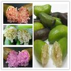 20PZ Finger lime seeds Citron Caviar Fruit Rare Plant Ice Pink Garden Balcony BE