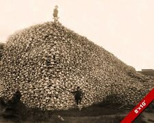 MOUNTAIN OF BISON BUFFALO SKULLS PILE OLD WEST PHOTO SHOCK ART REAL CANVAS PRINT