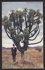 Arizona-Desert-Giant Yucca Palms-Tree-Antique Postcard