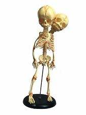 Human Fetal Siamese Twin Skeleton Anatomical Fetus Halloween Horror Prop Skull