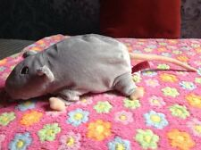 Sweet Little Soft Toy Rat By Pms