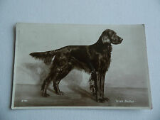 Irish Setter - Irish Setter - Postcard - Post Date 1932.