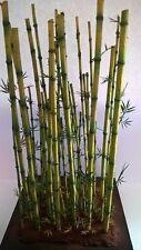 Modello IN SCALA 1/35 Pianta-Bambù Diorama Kit di accessori