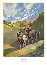 """1957 Vintage FRANCIS LEE JAQUES """"BIGHORN SHEEP"""" WOW! Color HUNTING Lithograph"""