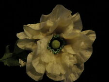 "Vtg Millinery Flower 5"" Poppy Ivory Cream Trim for Hat Wedding + Hair Drama K59"