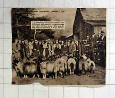 1936 Shepherds Meet At Mardale, Near Ullswater, Exchanging Stray Sheep