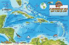 Caribbean Sea Coral Reef Creatures Guide & Map Laminated Fish Card Franko Maps