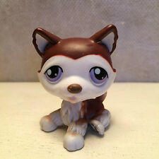Littlest Pet Shop LPS #427 Chocolate Brown & White Husky Purple Eyes Dog 6 pics