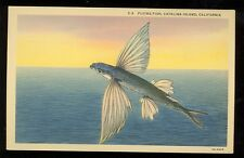Flying Fish, Catalina Island, California (1930-45 Linen (Fishing#256*