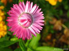 500 Samen Sommer Blumenmischung Wild Blumen-Wiese Bienenweide Hummelwiese
