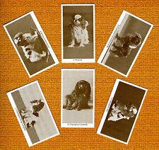 King Charles English Toy Spaniel Set 6 Dog Trade Cards