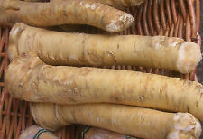 Horseradish Roots - 1LB Organic Bare Root Ready to Eat or Plant 1 Pound 1 LB