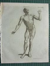 Dibujo Original Antigua de impresión de 1797 ~ ~ vista frontal Músculo Anatomía Macho Figura