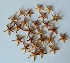 "TWENTY FIVE (25) 7/8 to 1-1/2"" FLORIDA STARFISH SEA SHELL  DECOR  TROPICAL"