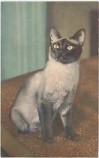 CAT Animal Postcard Feline Pet Stehli #57 SIAMESE Switzerland Print C4