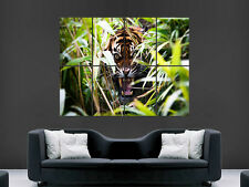 TIGER ANGRY ROAR THROUGH THE  JUNGLE  WALL POSTER ART PICTURE PRINT LARGE