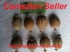Premium - 500 Organic Giganteum Poppy Seeds, Papaver Somniferum,