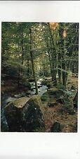 BF28624 les vosges un sous bois forest   france  front/back image