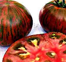 35+ Seeds KILLER TOMATO FLAVOR - Tomato Heirloom - CHOCOLATE STRIPES