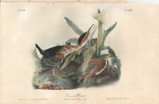 Birds of America.  Audubon. Octavo. Green Heron. 1859 ed.